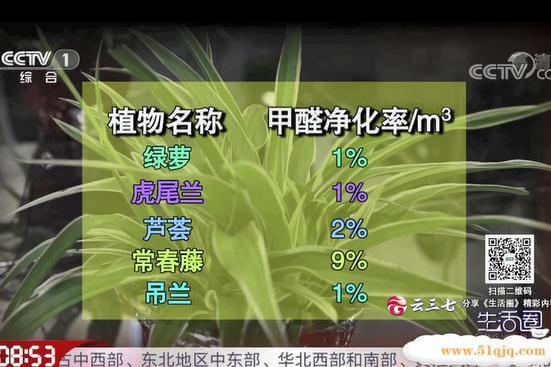 什么植物除甲醛最好验证数据